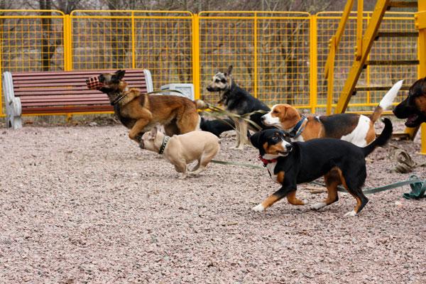 дрессировка собак на площадке